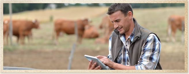 Farmer viewing local news on tablet in field.