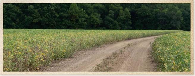 A road bends in between two crops