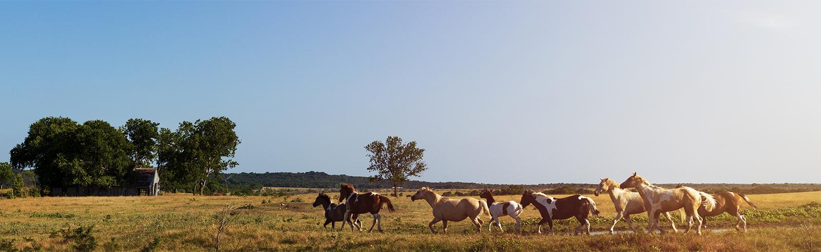 landscapes publication background footer image
