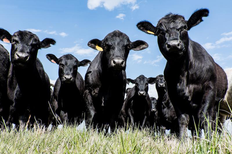 livestock-loans